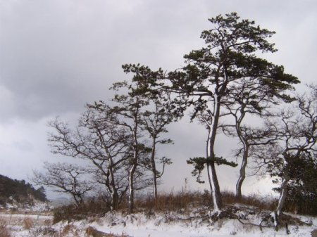 Source: photo taken by a  Korean labour activist,  Lee Chang Geun,  Jan year 2010 : A beautiful  heave snowing  winter scene at Bigeum-Island,  South Korea ( is located in West-South Sea of Korea peninsular)