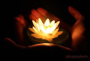 lotus-candle-alicepopkorn-sm